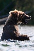 Avara luonto: Karhun elämää