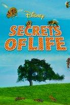 Elämän salaisuudet