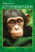 Simpanssi nimeltä Oscar