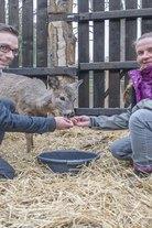 Eläinhoitolan tarinoita